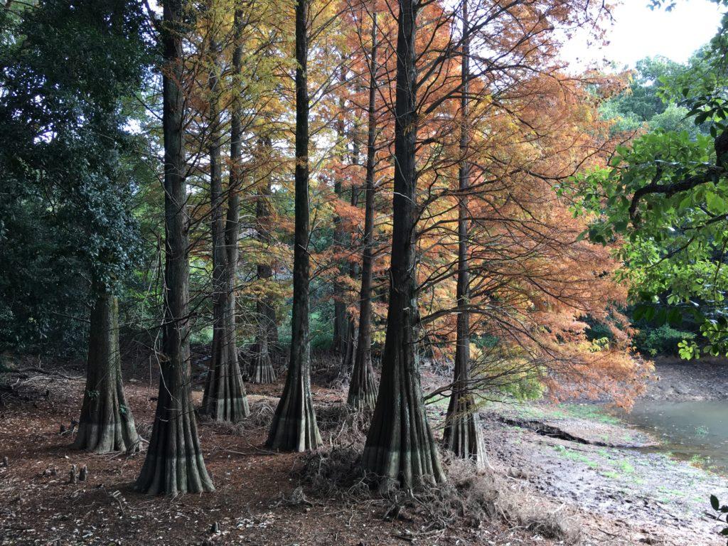 九大の森,交通渋滞に環境悪化で閉鎖も検討