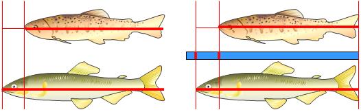 長さの直接比較と間接比較